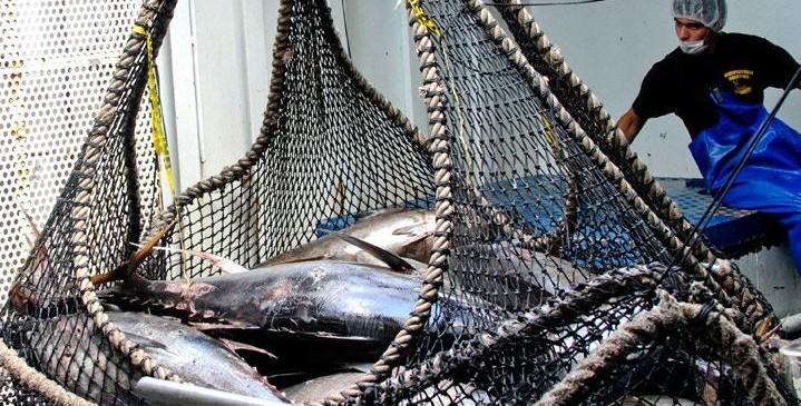pesca-atun